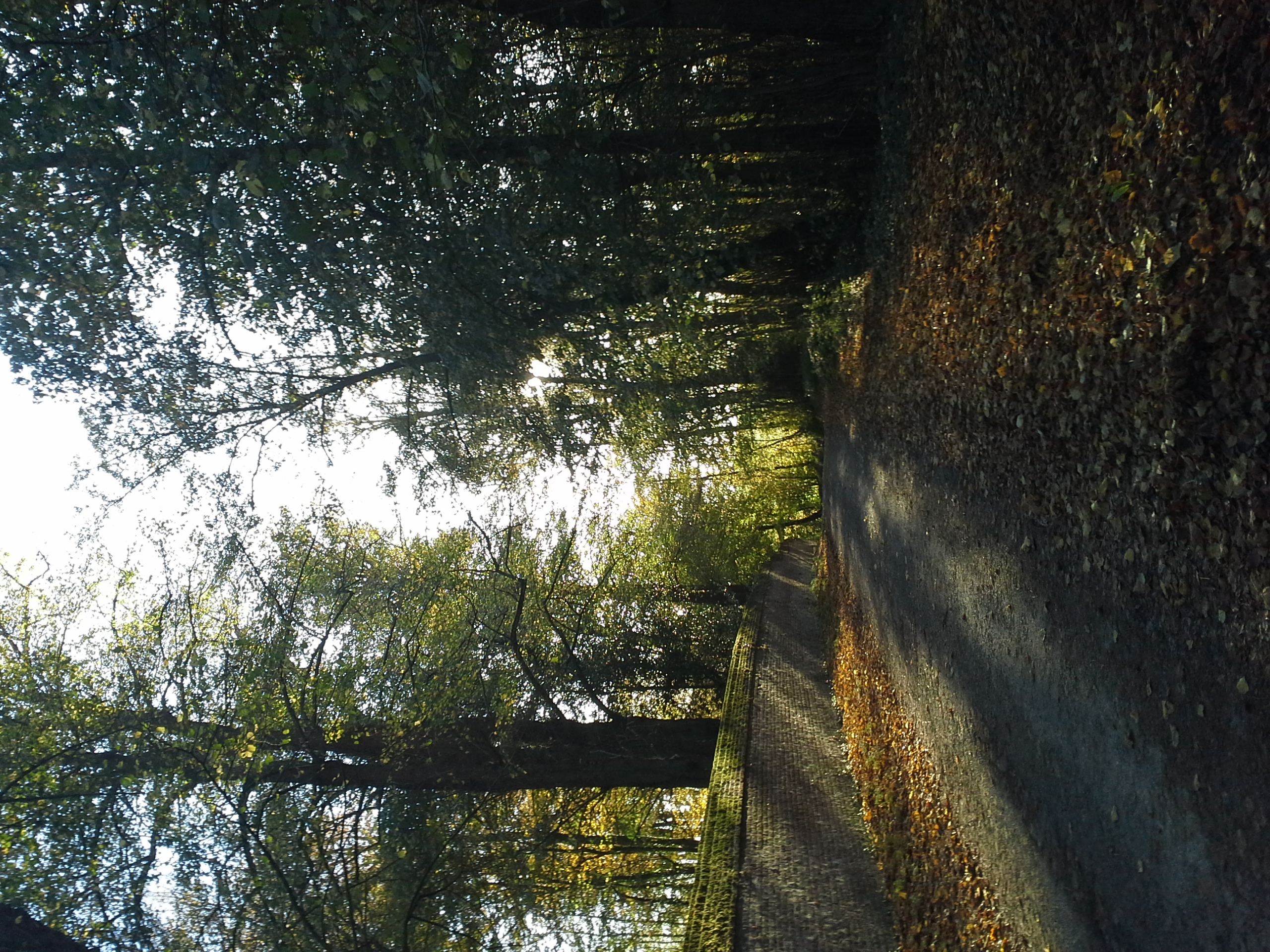 chemin chateau foret